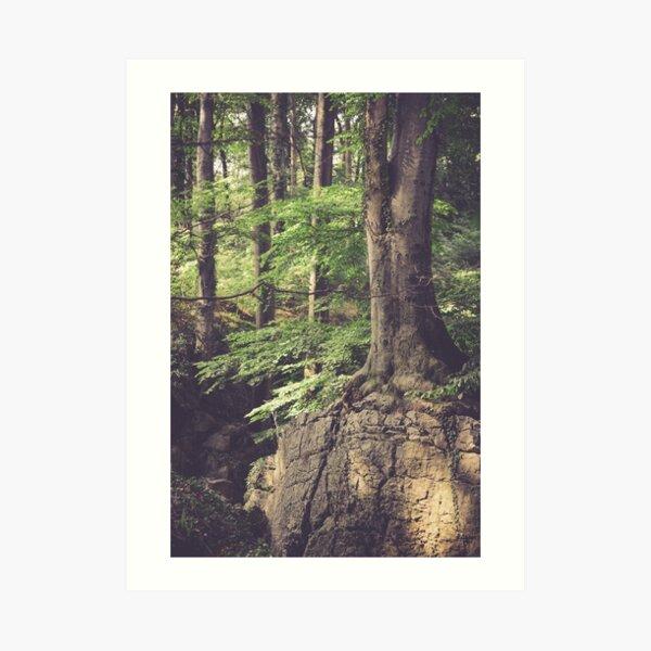 Mystisches Waldland Kunstdruck