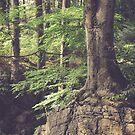 Mystic woodland by Brixhood
