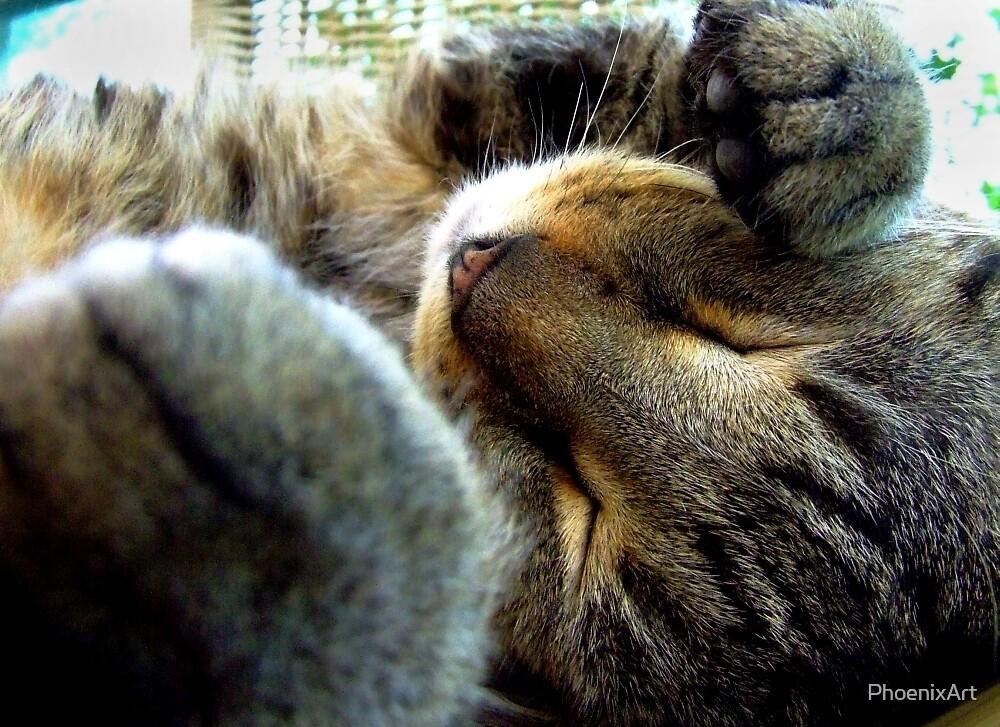 Let Sleeping Kitties Lie by PhoenixArt