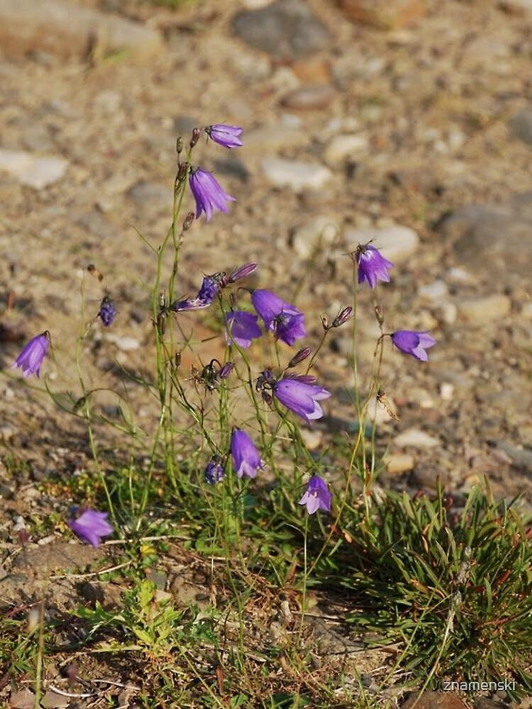 #flower #nature #outdoors #grass #field garden leaf season summer petal by znamenski