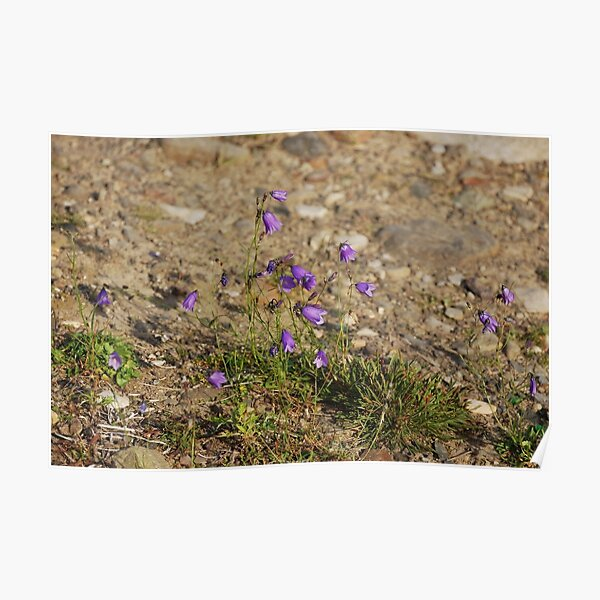 #flower #nature #outdoors #grass #field garden leaf season summer petal Poster