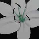 Painted Lilies Collection #11 by Laura Dhir
