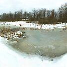 Emily Traphagen Nature Preserve's frosty pond by Ed Michalski