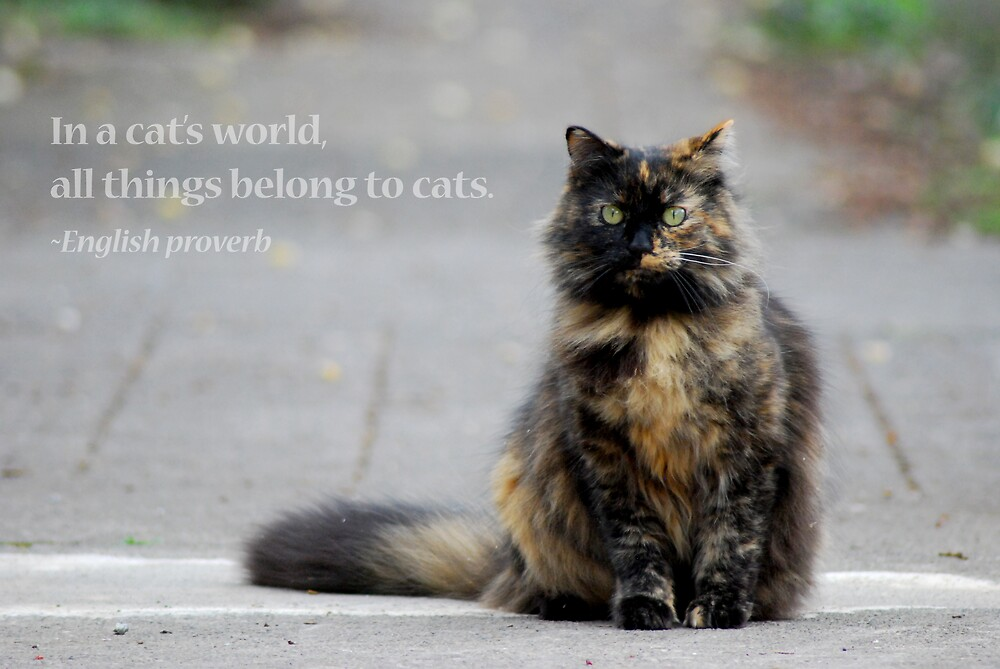 Cat's World by Zolton