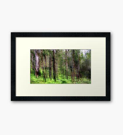 Rainforest Lines Framed Print