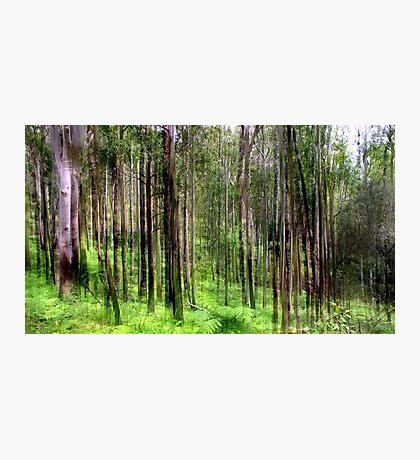 Rainforest Lines Photographic Print