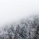 Frozen forest by Patrik Lovrin