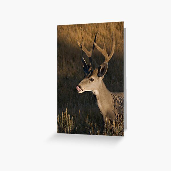 Mule deer - Yellowstone National Park Greeting Card