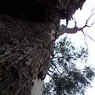 tree by annierose