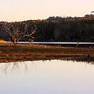 Muted Evening Tallows by byronbackyard