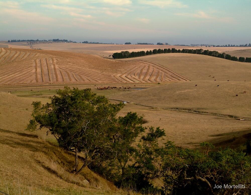 Barrabool Hills Farmlands by Joe Mortelliti
