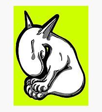 Shy English Bull Terrier  Photographic Print