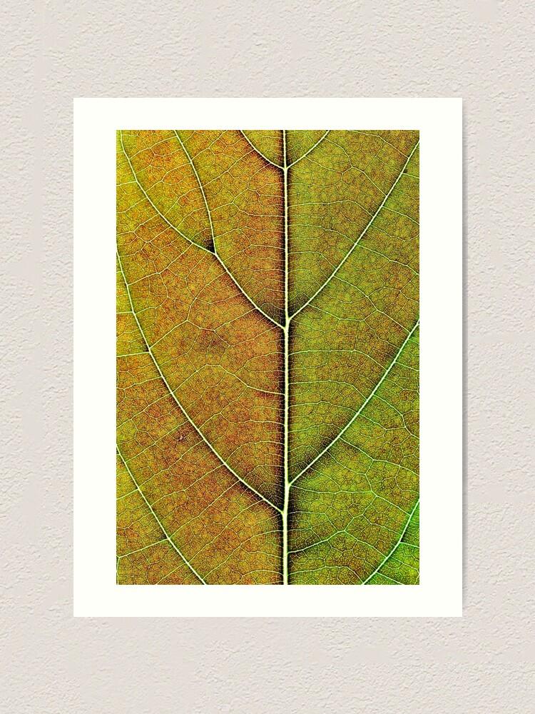 Alternate view of Avocado leaf structure  Art Print