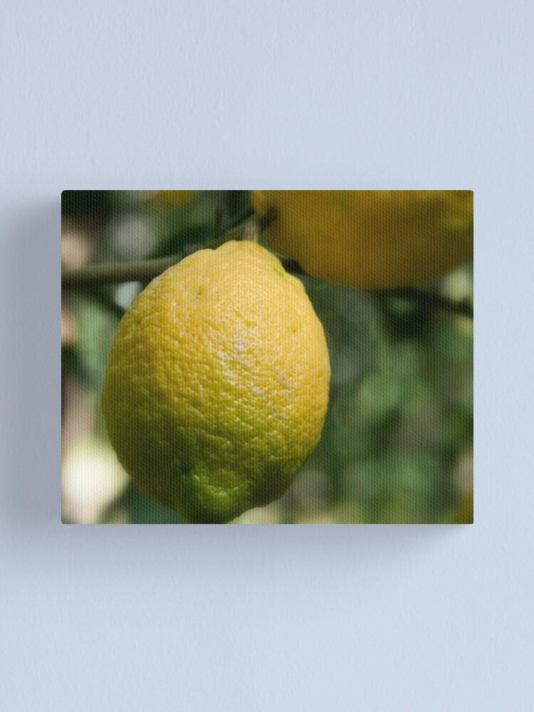 Alternate view of Uno sfumato al  limone Canvas Print