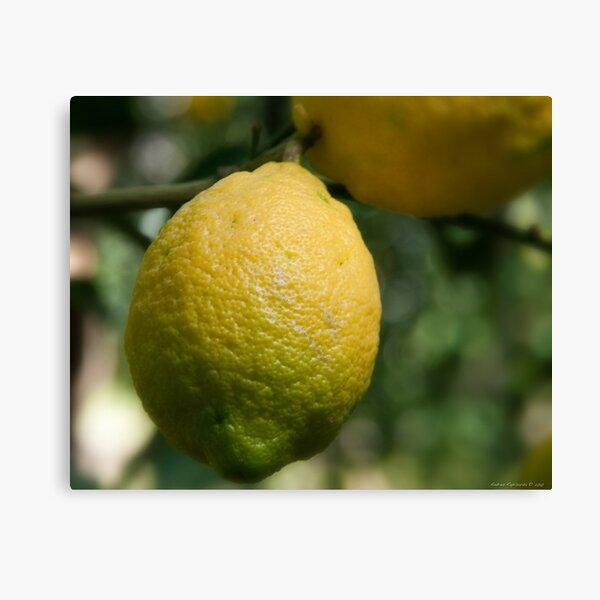 Uno sfumato al  limone Canvas Print