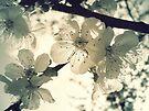 In Bloom by Mojca Savicki