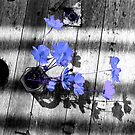 Flower on a table by Digby