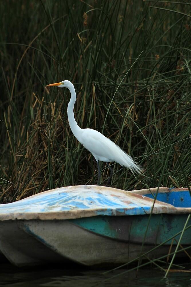 Great White Heron on a Skiff by rhamm