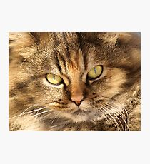 Furry Buddy Photographic Print