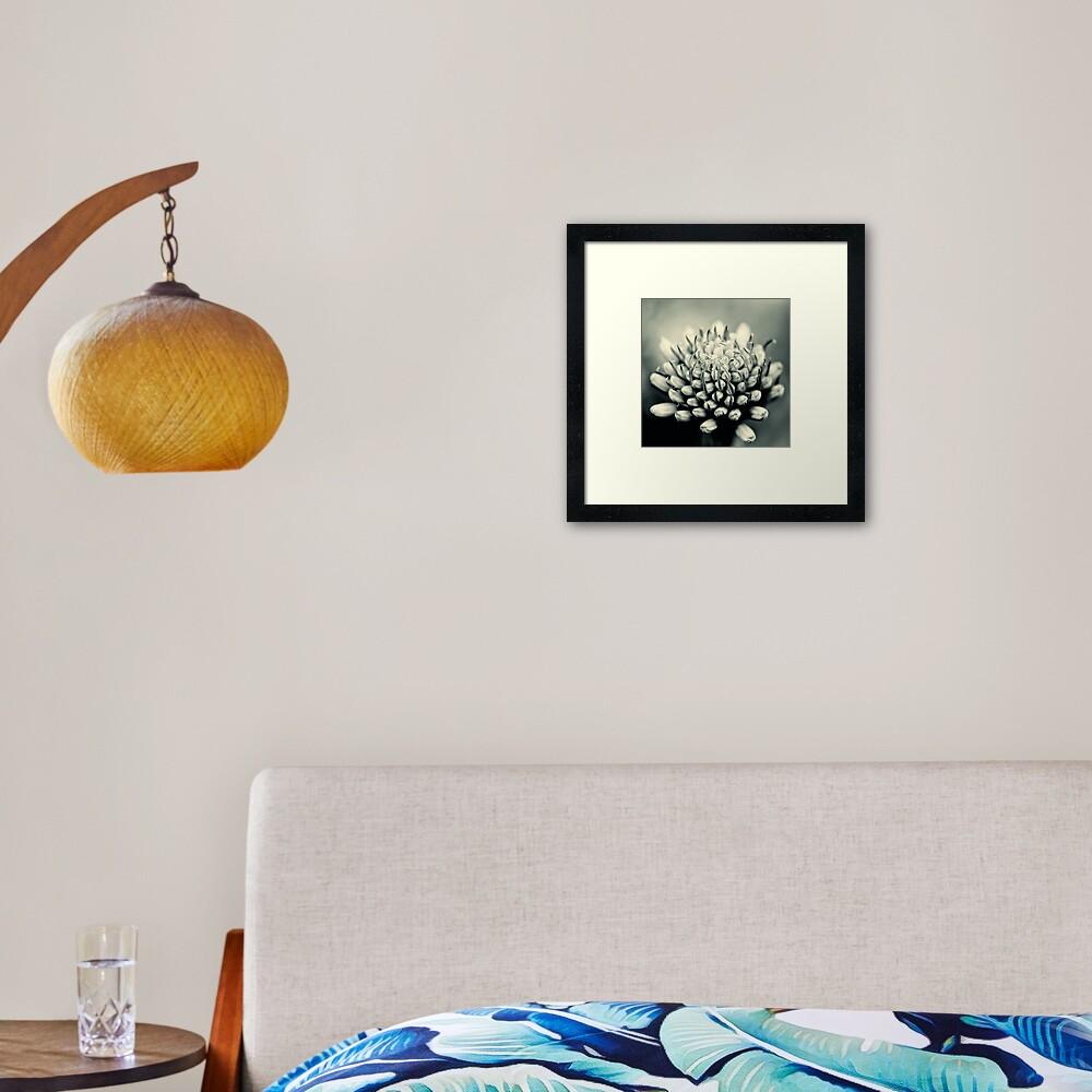 Aleo Vera flower Framed Art Print