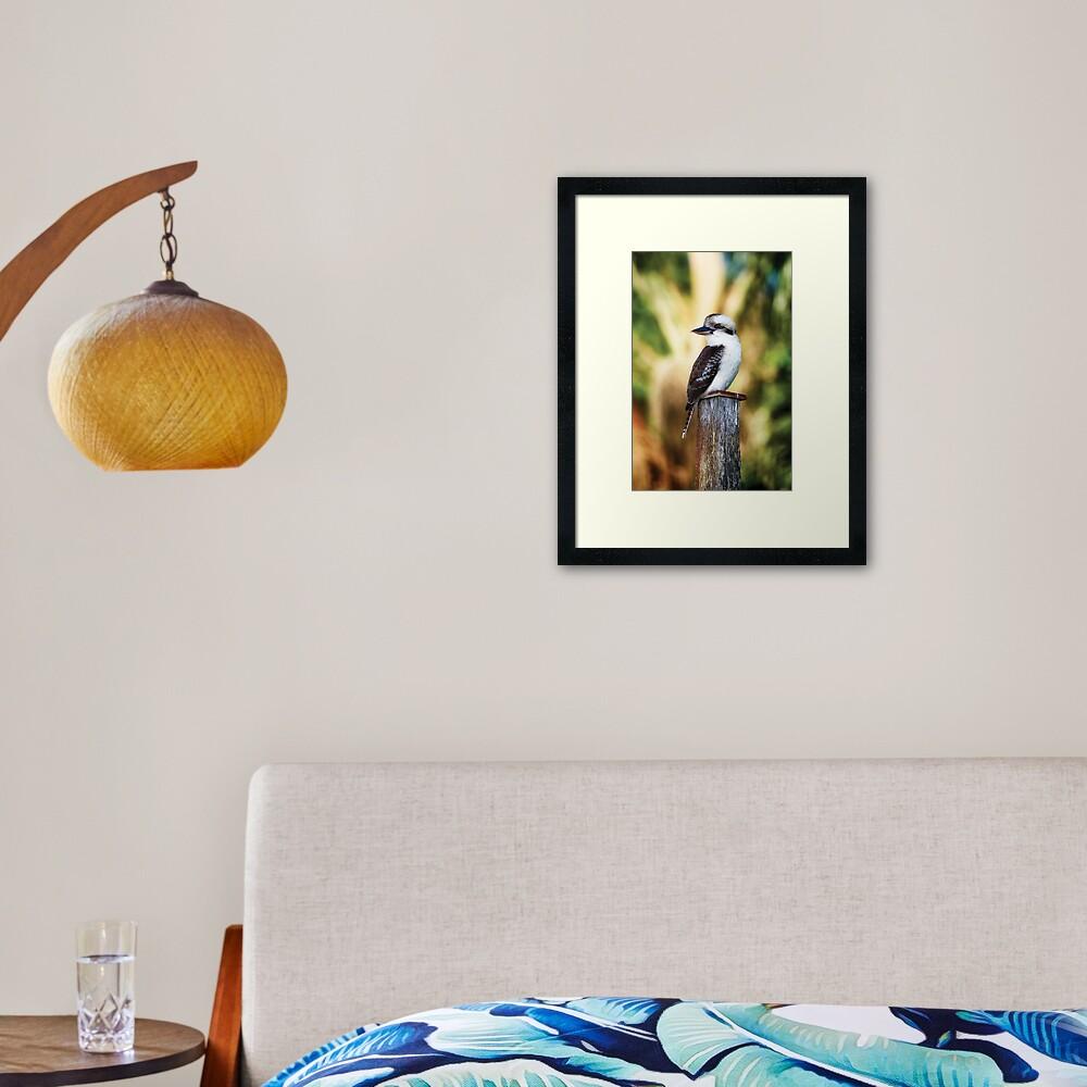 Young Kookaburra Framed Art Print
