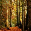 Fall Walk by Tracy Riddell