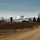 County Road by Barb Miller