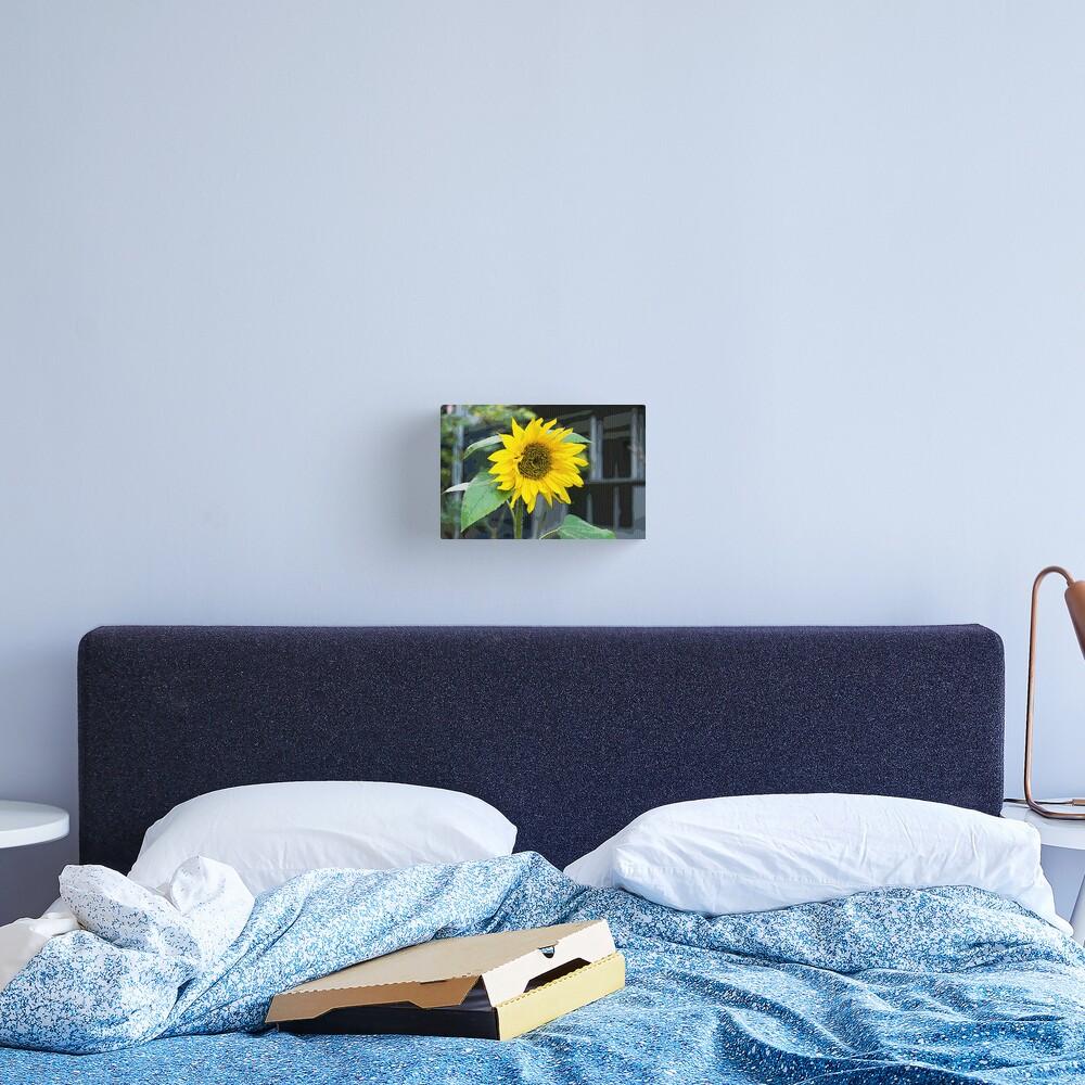 Sunflower, Posterized Canvas Print