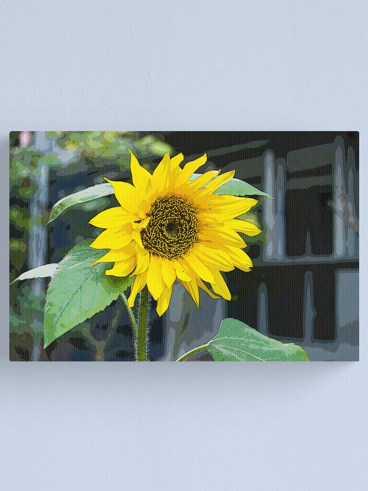 Alternate view of Sunflower, Posterized Canvas Print