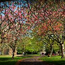 Blossom in the Wellhead park by Mick Smith