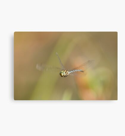 On the Fly Canvas Print