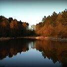 St Peters Ponds - Bourne Woods by Mick Smith