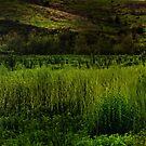 Grassy Meadow by socalgirl
