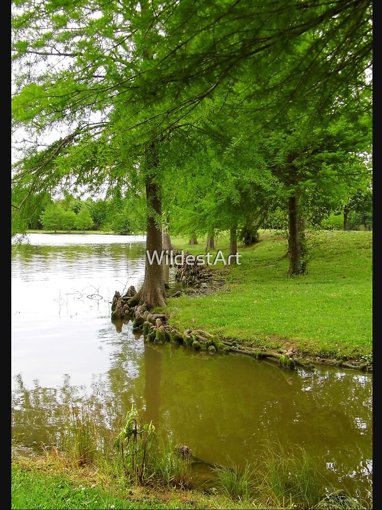 Cypress Knees by WildestArt