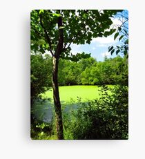 Sheldon Marsh Algae Pond Canvas Print
