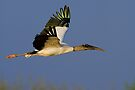 Wood Stork by WorldDesign
