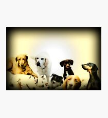 Canine companions Photographic Print