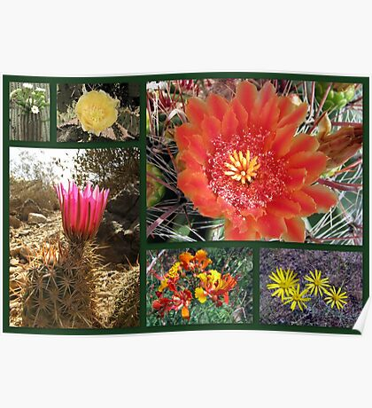 Flowers & Cacti in the Southwest Poster