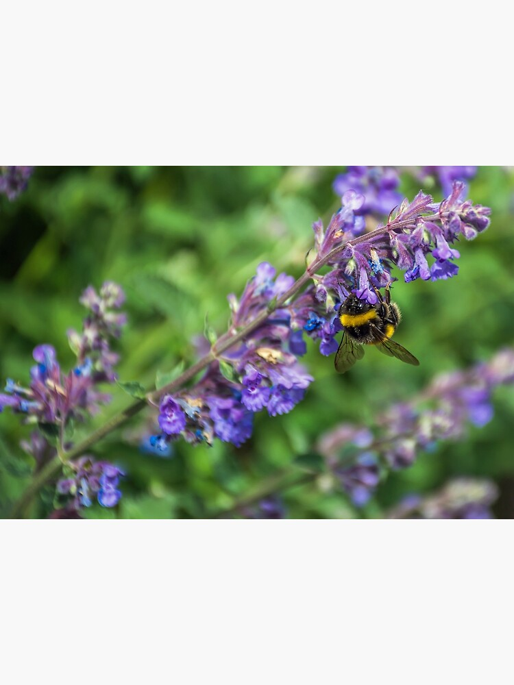 Bee on purple flowers by tdphotogifts