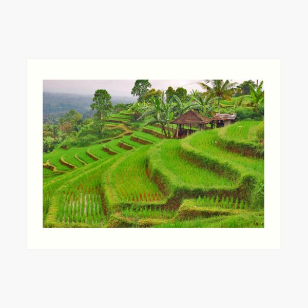 Green rice terraces Art Print