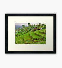 Green rice terraces Framed Print