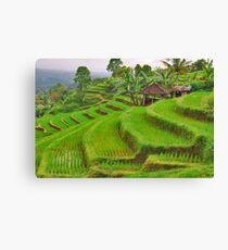 Green rice terraces Canvas Print