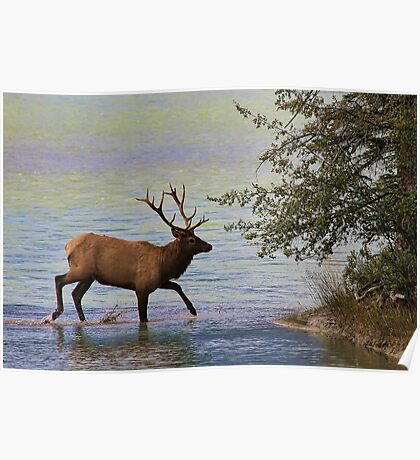 Magnificent Stag in Jasper National Park Poster