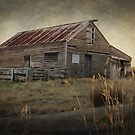 The Old Shed by Kerry Duffy