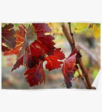 Vine leaves - South West of WA Poster