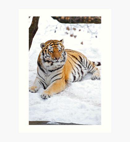 Basking in the Snow Art Print