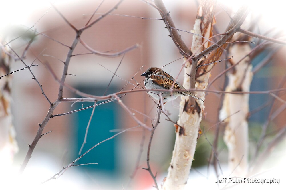 Sparrow by Jeff Palm Photography