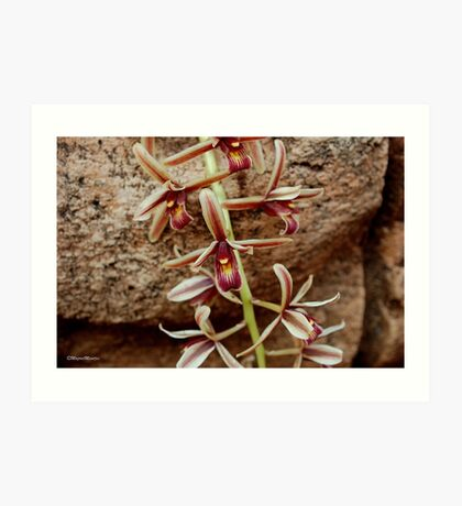 IN CONTRAST - THE ROCK AND THE DELICATE ORCHID Art Print