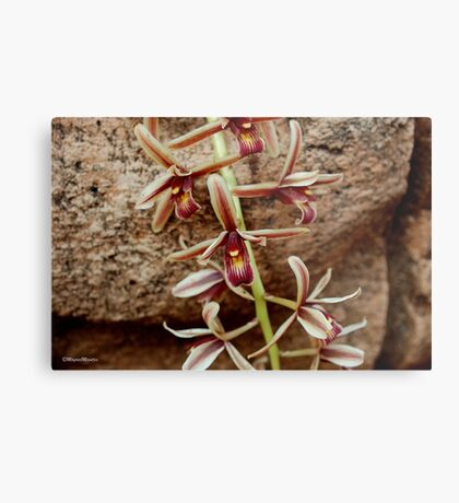 IN CONTRAST - THE ROCK AND THE DELICATE ORCHID Metal Print