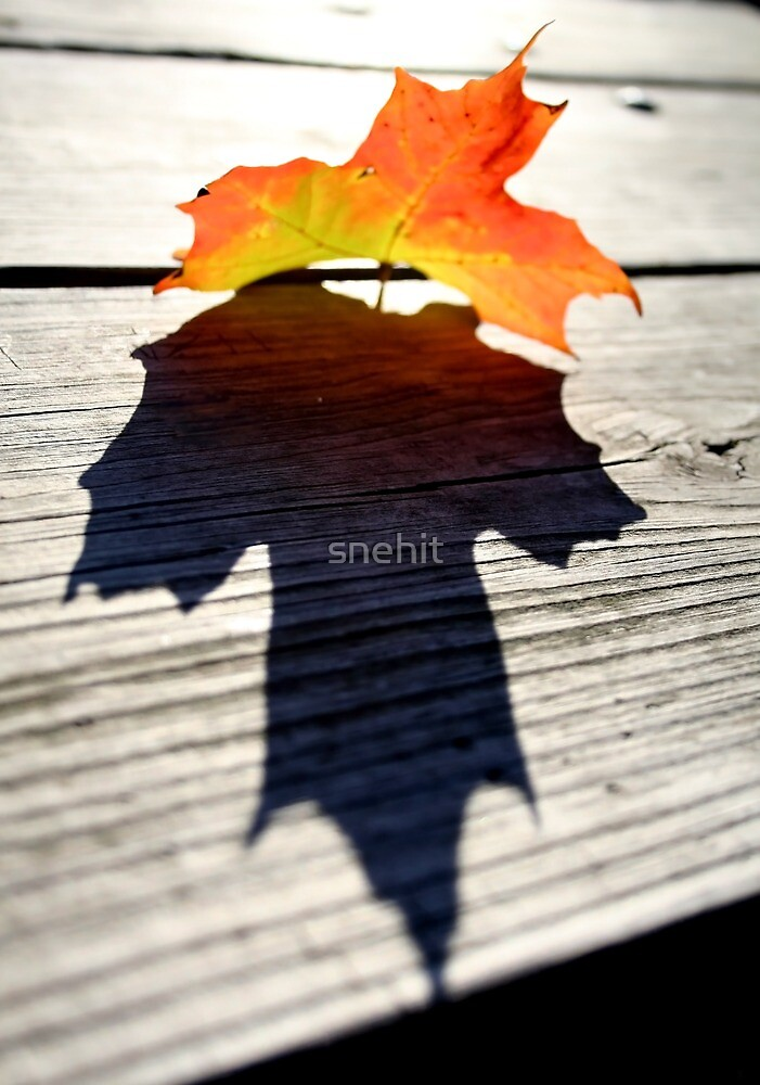Maple Leaf by snehit
